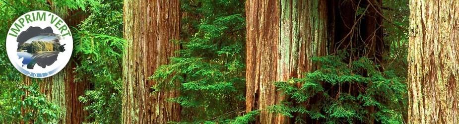 Altiprint s'engage à réduire les impacts environnementaux